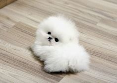 74 Best Cute Small Puppies Images Cute Puppies Pets Little Puppies