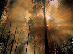 Morning after a forest fire