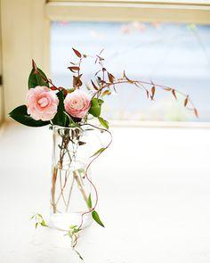 Otome-Tsubaki (Camellia) pink