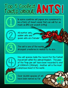 ~FREE PRINTABLE~  Top 5 coolest facts about... ANTS! {Green Grubs Garden Club Blog}