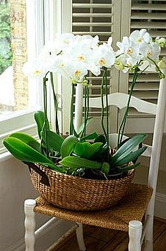 Basket of orchids why not put a flower arrangement on a chair, especially if the chair is old and delicate and you donn't want anyone to sit in it.