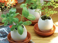 mini horta na cozinha - Pesquisa Google
