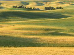 Farm with Wheat Fields, Whitman County, WA Photographic Print