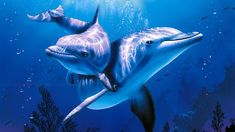 The Best Relax Music and Dolphins Aquarium - Sleep Relaxing Music - 2 Hours - HD 1080P - YouTube