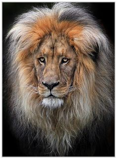 A King by Klaus Wiese. Such a wise, old soul. Wow.