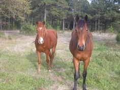 Chestnut on the left and bay horse on the right... beautiful! :)