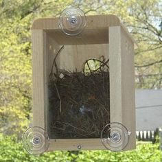 $20 Window nest box for the birds