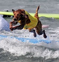 The sky's the limit when it comes to summer fun you can have with your dog! How about a surf lesson?