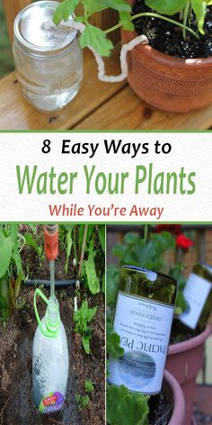 How to Water Plants While You're Away