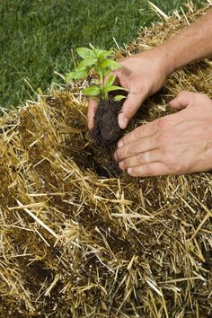 """How to Build a Straw Bale Garden  t straw is an ideal """"container"""" for growing vegetables. """"The hollow tubes are designed by Mother Nature to suck up and hold moisture,You can put together a straw bale garden right on your lawn, your driveway (o"""