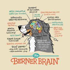 Berner Brain Print