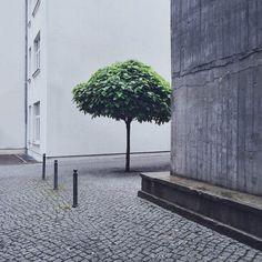 konradlanger_concretejungle Kopie