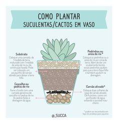 New succulent garden indoor tips 63 Ideas Succulent Gardening, Succulent Terrarium, Cacti And Succulents, Planting Succulents, Cactus Plants, Container Gardening, Gardening Tips, Eco Garden, Cactus Y Suculentas