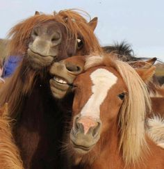 "Horses.......they look like those pictures you take with your friends all the time!      ""SAY CHEESE!"""