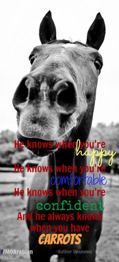 """He knows when you're happy, he knows when you're comfortable, he knows when you're confident, and he always knows when you have CARROTS."""