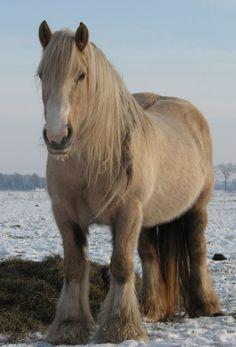 Winter coat - Horse