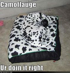 camoflauge-you-are-doing-it-right-loldogs-lolpets-lolpets-funny-dog-dalmations-101-epiclosers