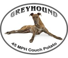 Most people can't believe how chill greyhounds are in the home.  Outside, they are speeding bullets!