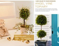Ahhh.. Ivy Topiaries! I love it when they are designed in shapes like the heart one they offer on their website, I'll pin it in just a second!