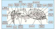 Morfologia e Biologia