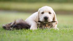 a fellow as a pillow