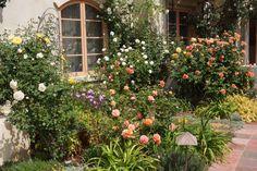 lovely southern california rose garden via pieceofeden.blogspot.com