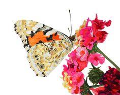 #Painted Lady Butterfly #butterfly #butterflies #watercolor #watercolour #art #painting #beauty #flowers #brigitteklassenart