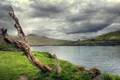 Old tree, Sandavágur, Faroe Islands.