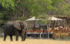 From a delightful pizza evening at Mudson Hide to ele action at Broken Rifle Pan to more in-camp wildlife activity, professional guide Garth Thompson shares some enviable safari moments from around Little Makalolo. Zimbabwe, Best Games, Wilderness, Safari, National Parks, Wildlife, Elephant, Pizza, Action