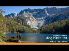 Scott Quirsfeld from the Eastside K9 Avalanche rescue shares his tips for hiking with your dog.