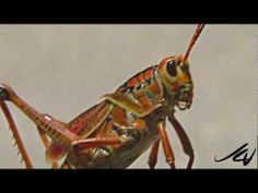 grasshopper essay