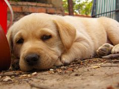 Male dog names with meanings   Male dog names - http://seedogpictures.com/male-dog-names-with-meanings-male-dog-names/