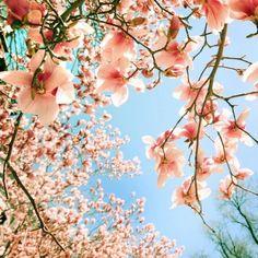 primavera Te queremos primavera <3