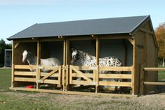 Beautiful Appoloosa Horses in their Outpost Holding Stall Horse Shed, Horse Stables, Horse Farms, Horse Farm Layout, Horse Shelter, Funny Horses, Ponies, Appaloosa, Stalls