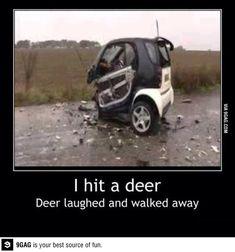 Deer: 1  Smart Car: 0