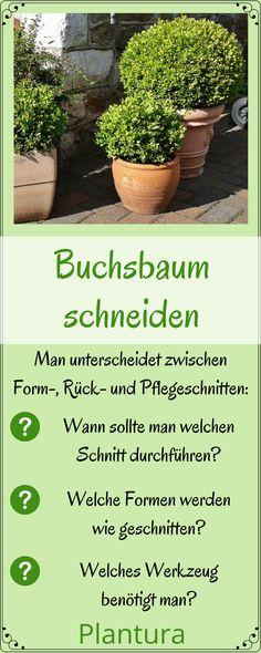 Buchsbaum schneiden #Buchsbaum