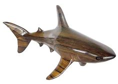 Bull Shark ( M )
