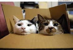 cool Why Do Cats Love Boxes? 12 Facts About Cat In The Box You Probably Didn't Know