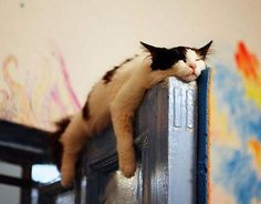 anywhere is a good place to nap...