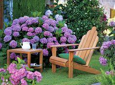 Hortensien – die große Vielfalt - Mein schöner Garten