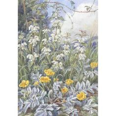 Margaret Tarrant - Silverweed and White Dead-nettle