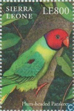 Sierra Leona 2000 - La Cotorra Ciruela es una especie de ave psitaciforme de la familia de los Psittaculidae que habita en el subcontinente indio. El brillante plumaje de la cabeza del macho es inconfundible