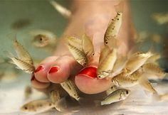 FISHY PEDICURES-- This bizarre pedicure involves sticking your feet into a tub of water filled with toothless fish that then nibble away at the dead skin. Fishy pedicures originated in Turkey and a handful of locations in the country offer the service, including Yvonne's Day Spa in Alexandria, Va. If you live in Washington state, however, you are out of luck: The state outlawed the treatment, saying it is unsanitary.