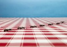 Natural ways to get rid of ants!