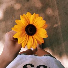 Image uploaded by Pamela Lindsey. Find images and videos about flowers, yellow and sunflower on We Heart It - the app to get lost in what you love. Tumblr Photography, Photography Poses, Photography Flowers, Sunflower Wallpaper, Photos Tumblr, Foto Art, Flower Backgrounds, Tumblr Girls, Mellow Yellow