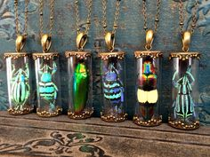 Real Insect jewelry weevil beetle necklace real bug jewelry terrarium necklace entomology taxidermy statement necklace amber insect pendant