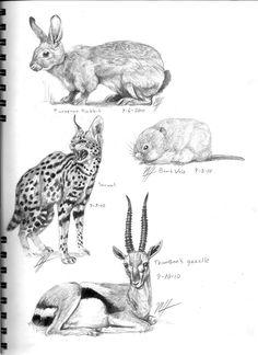 80de334393f3c7fe405197abe2a71e02 animal sketches drawing animals polar bear body diagram schematic diagrams