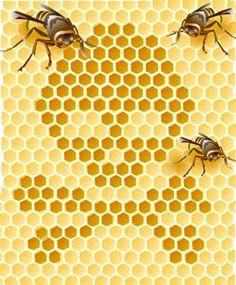 Empresas de bio-tecnologia exterminando as abelhas no planeta ~ Olhar Para o Fim