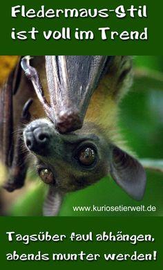 Alter Trend - neu entdeckt: der Fledermaus-Stil   Kuriose Tierwelt