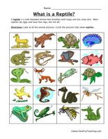 Reptile Classification Worksheet